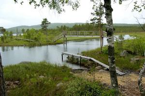 Margaretha Jonth vill slå vakt om naturvärden som dem i Närsen  på Nås finnmark.