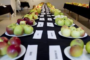 Nästan 250 olika äppelsorter från hela Sverige ställdes ut i Gävle slott.