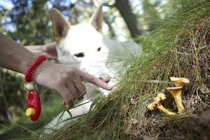 Äter hunden en giftig svamp ska du genast uppsöka veterinär. Foto: Fredrik Persson /  TT