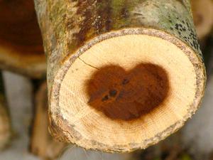 Det gäller bara att se sig omkring. Fastän det är mitt i vintern och trädet är kapat så sprider gullregnet sin kärlek.