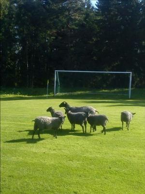 Gästerna hjälpte till med gräsklippningen.