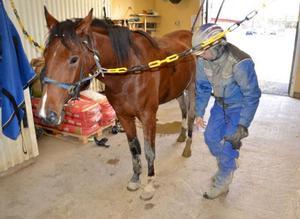 Att träna en häst kostar mycket pengar och tar mycket tid. Treåriga stoet Labolina Bob är en häst som Rikard Skoglund tror ska kunna ge en del tillbaka när hon kommer ut på tävlingsbanan igen.