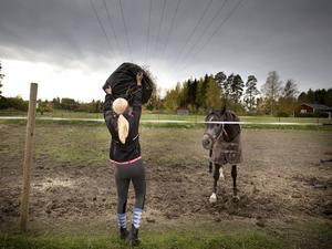 Ebba Mattsson från Delsbo har funderat på att börja rida och ville testa på hur det är att vara i stallet en dag. Här matar hon hästen Isidor.