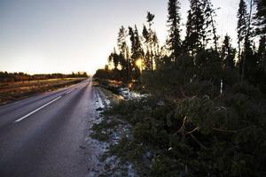 Strömsund var den länskommun som drabbades hårdast av stormen Hilde.