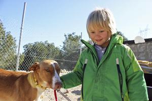 Promenad. Rebecka Leone tar en promenad med en av hundarna.Foto: Privat