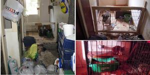 Stora brister konstaterades i djurhållningen hos en privatperson i Dalarna vid en inspektion som gjordes av länsstyrelsen och polisen. Bilder från länsstyrelsen.