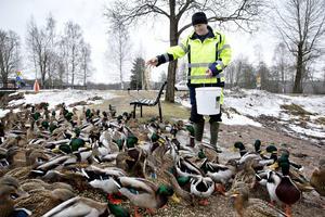 Inge Widgren från parkavdelningen bland fåglarna vid