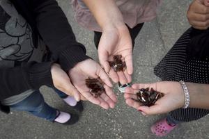 Ölflaskor, ölburkar och krossat glas i sandlådan och på skolgården, mötte dessa tre tjejer på måndagen. De tillbringade rasten med att plocka upp spillrorna.