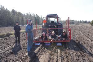I går satte Dan Johansson årets första lök med hjälp av Jonas Pettersson och volontärerna Esther von Kalkstein, Hanna Weiss och Moritz Springer från Tyskland. Medan traktorn rullar ligger de på mage på vagnen och släpper ner sålök i fårorna.