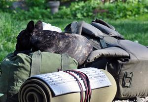 Lill & storhusse ska ut på vandring och hunden Harald säkrar sin plats. NU kan dom väl inte glömma att ta med honom??