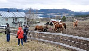 Det ryska tv-teamet har gjort en hel veckas rundtur i länet där man fokuserat på mode, stil och traditioner. Men även djur och ett besök hos islandshästarna hos Ola Sundquist och Elin Eriksson i Jorm stod därför på programmet.