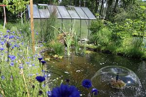 I trädgården finns en damm där guldfiskar trivs.