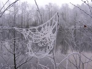 Lite frost gör världen lite vackrare