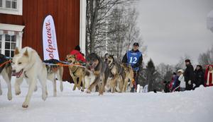 Amundsen Race har ökat intresset för draghundssporten i Strömsund. I ett bredare sammanhang framöver erbjuds kommunen draghjälp ihop med andra kommuner.