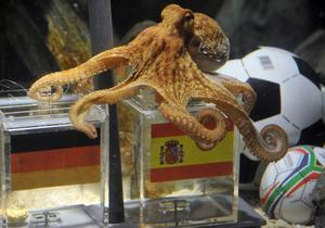 Bläckfisken Paul valde Spaniens låda inför onsdagens semifinal.