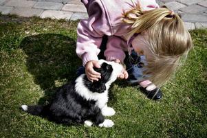 Amanda lär Katie att sitta, då är det bra att ha lite godis eller korv i fickan.