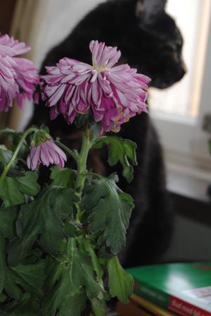 Lilla Skrålla kollar ut genom fönstret på alla människor , men tycker också om blommor:)