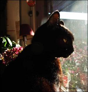 11/11 2011 klockan 11:11 så befann jag mig hos min morfar på Åsgatan (Ljusdal) och där i köksfönstret satt katten Sotis och njöt av dagen.