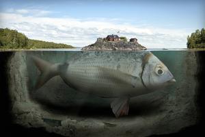 Fishy island.