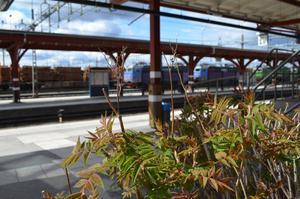 Männen följde med den unga kvinnan från tågstationen i Ånge och vidare mot Östersund.