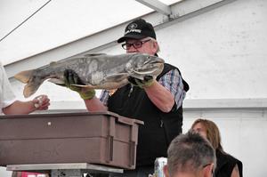 Den stora kanadarödingen på nästan 8,5 kilo visas upp för publiken inne i tältet.