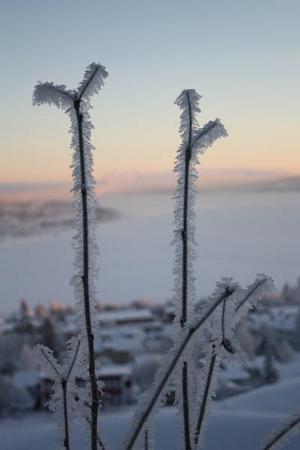 Frost. Foto: Jennifer Olofsson