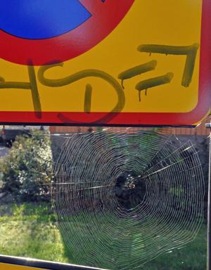 P-förbudet på Svarvargatan gäller ej spindlar.