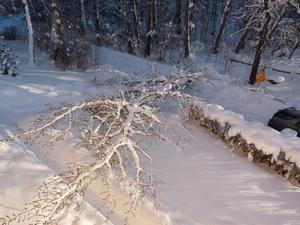 Förra helgen när vi kom hem hade ett träd rasat över skogsvägen och in på vår uppfart! Den ligger fortfarande kvar som en hinderbana, inte det lättaste att ta sig till bilen och soptunnorna!
