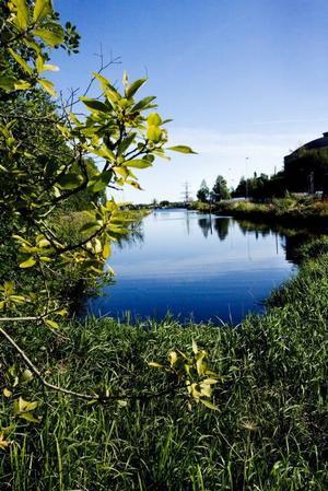 Stenborgskanalen ska saneras på omkring 20 000 kubikmeter stenkolstjära. Projektet kostar 33 miljoner kronor, varav Gävle kommun står för 3 miljoner och Naturvårdsverket för resten.