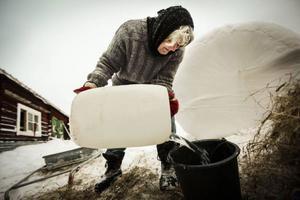 Många liter vatten ska ut till fåren varje dag.
