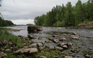 Även vid låga vattenflöden strömmar det i Leknäsforsen, varför det kan vara tryggt att gå förbi forsen med kanoten.FOTO: KERSTIN ERIKSSON