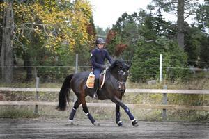 """Disciplin. Hästen Tindra har varit på anläggningen i fyra dagar. """"Hon behöver en grundutbildning och träna sina muskler"""", säger Pascal Rocque Roivainen. Foto: Måna J Roos"""