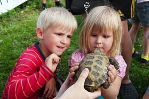 Inte riktigt lika mjuk som katterna hemma, men väldigt spännande, tyckte syskonen Alfred och Whilda Bergström om sköldpaddan som gjorde ett gästspel på Barnens dag.