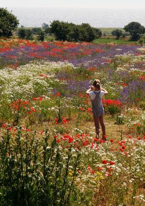 Våra vänners dotter förevigar detta blomsterhav med det riktiga, glittrande havet i bakgrunden.