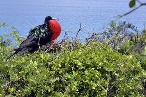 En fågel vid Galapagosöarna. Platsen lockar varje år hundratusentals besökare som försöker få en glimt av dess ekologiska mångfald.