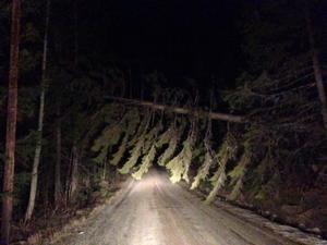 Vägen vid Kallsta, Noraström, på fredagsmorgonen. Mellan Torrom och Klockestrand låg det sju träd över vägbanan, som nu är bortröjda.