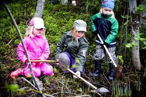 Tuva Paulsson samt Hedda och Vide Leander försökte fånga småkryp i sjön.