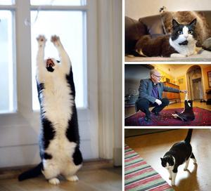 Porrtad. Sixten, the cat är viril, verbal och har egen blogg, men har är inte syndfullt snuskig. Det försäkrar husse Lars B Stenström, kyrkoherde.BILD: KICKI NILSSON/Nerikes Allehanda