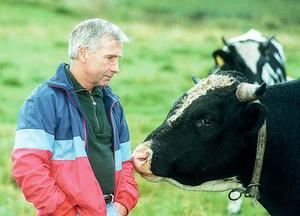 """Korna, de mjölkkor han själv hade och de köttkor som sönerna Pär och Karl-Erik har, stod Olle  Nord nära. """"Det bästa han visste på sommaren var att stänga hage åt korna och se att de hade bra bete"""", säger Pär Nord"""