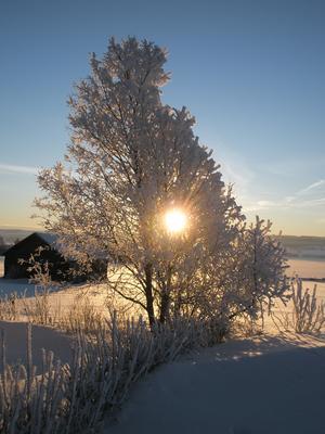 Vinter i Optand.