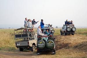 Alla bilar i närheten har precis som vi hittat till den bästa skådeplatsen för skådespelet som utspelar sig _ några lejon attackerar en zebraflock på väg för att dricka.    Foto: Sofia Hallonsten