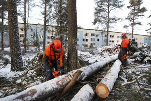 Henrik Borin och Hasse Olsson hör till den styrka som röjer upp efter stormen Dagmars framfart.