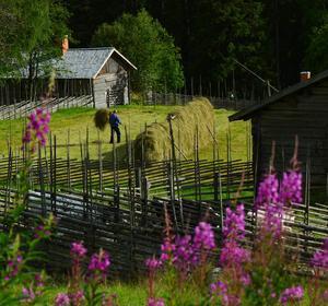 Seth Nilsson vann Hälsingetidningarnas fototävling 2012 med den här bilden från Våsbo fäbodar norr om Edsbyn.