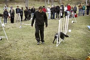 Duktig hund. Bertil Richter och bordercollien Mirell från Frövi visade sina färdigheter på Nora brukshundsklubbs agilitybana.
