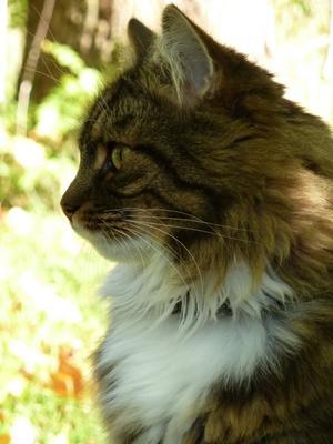 Våran katt Nisse njuter av höstsolen.