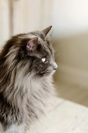 Katten Skaj.