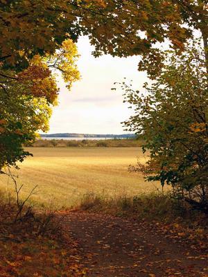 Hösten kom till Tidö