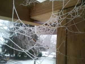 Vid ett vintrigt besök i vårt hus i Bysala kunde vi inte låta bli att imponeras av hur ett så litet djur som en spindel kan forma så fina mönster.