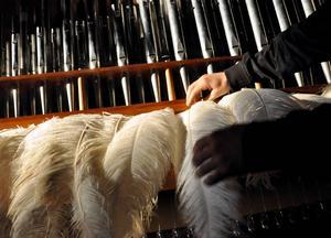 Strutsplymer från Borlänge pryder sin plats. När orgeln spelas sätter orgelverket plymerna i rörelse.