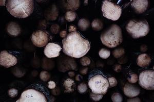 I först hand är det granträd som ska tas om hand för att minska risken för angrepp från Granbarksborren,